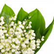 Bouquet of lily of the valley — Stock Photo