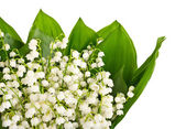 Bouquet of lily of the valley — Стоковое фото