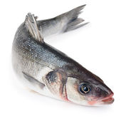 Seabass fish Isolated — Stock Photo