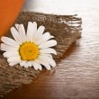 Chamomile flower on wooden background — Stock Photo