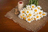 Taze papatya çiçeği — Stok fotoğraf