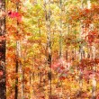 Colors of autumn or fall in forest — Stock Photo