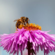 Bee and fower. — Stock Photo