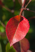 Leaves in autumn. — Stock Photo