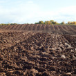 Plowed field. — Stock Photo #13683561