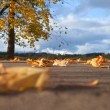 Stock Photo: Fall of leaves.
