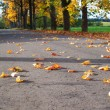 Foto Stock: Fall of leaves.