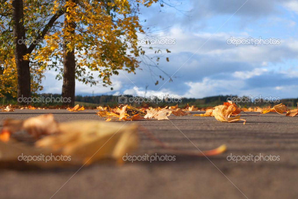 Fall of leaves in autumn. — Stock Photo #13683563