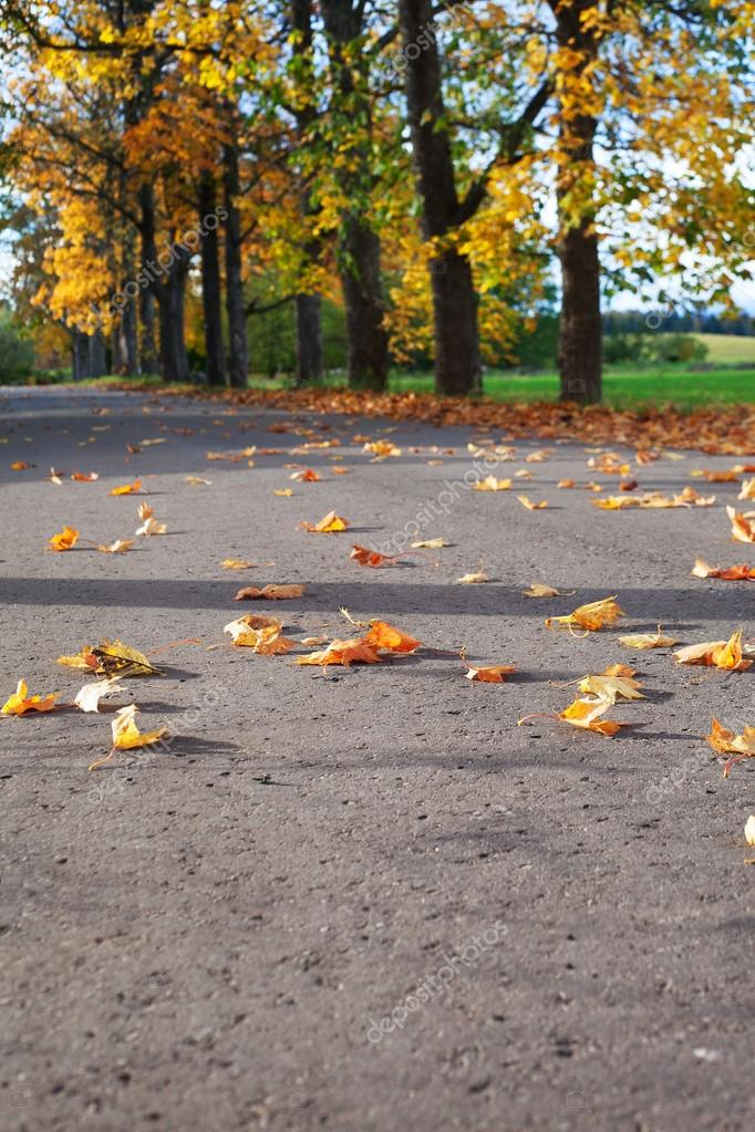 Fall of leaves in autumn. — Stock Photo #13683565