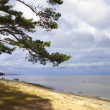 Baltic sea coast, Latvia. — Stock Photo