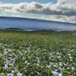 Stok fotoğraf: Snowy field and cloudy sky.