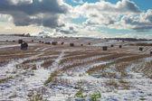Straw rolls in snow. — Stock Photo