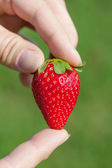 Strawberry in hands. — Stock Photo