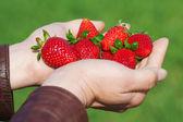 Strawberries in hands. — Stock Photo