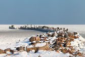 Breawater in frozen Baltic sea. — Stockfoto