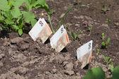 Money growing. — Stock Photo