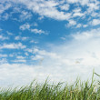Grass and sky. — Stock Photo #26430243