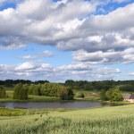 Green wheat field. — Stock Photo #26936455