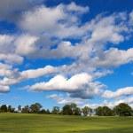 Green wheat field. — Stock Photo #26936465