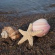Seashells and starfish. — Stock Photo