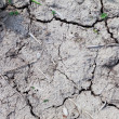 Stock Photo: Dry soil.
