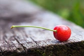 Cherry. — Stock Photo