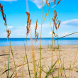 Stock Photo: Grass on the beach.