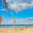 Stock Photo: Grass on beach.