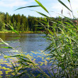 Stockfoto: Small lake.