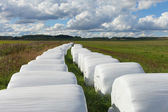 Haylage bales. — Stock Photo
