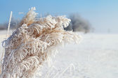 Dry grass in winter. — Stock Photo