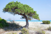 Sardinian coast of Mediterranean sea. — Stock Photo