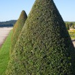 Hedge in Versailles, France. — Foto de Stock