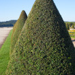 Hedge in Versailles, France. — Stock Photo
