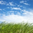 Stock Photo: Grass and sky.