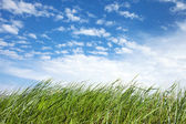 Grass and sky. — Stock Photo
