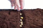 Germination. — Stock Photo