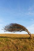 Tree at sea coast. — Stock Photo