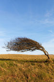 Tree at sea coast. — Foto de Stock
