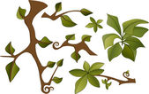 Set of branches and leaves — Stock Vector