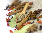 A variety of spices isolated — Stock fotografie