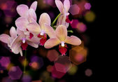 Brick red orchid — Stock Photo