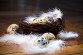 Feather eggs — Stock Photo