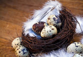 Easter feather eggs — Stock Photo