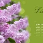 Lilac purple flowers — Stock Photo #47553627