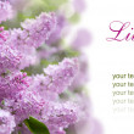 Lilac purple flowers — Stock Photo #47844709