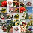 Set of 25 floral pictures for your design — Stock Photo