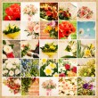 Set of 25 floral pictures on grunge old paper - Stock Photo