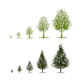 Stages of growing tree for your design — Stock Vector