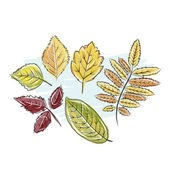 Sketch of autumn leaves for your design — Stock Vector